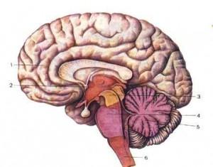 Давление в черепе